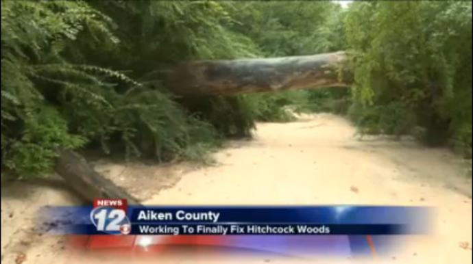 City looking to bring in expert to help Hitchcock Woods erosion